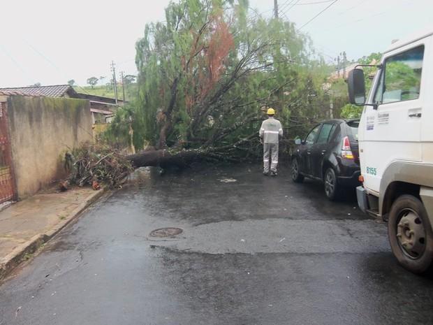 O Corpo de Bombeiros retirou uma árvore que caiu devido às chuvas e obstruiu a uma via no Bairro Santo Antônio em Araxá, no Alto Paranaíba, nesta quarta-feira (4). De acordo com o Corpo de Bombeiros, a árvore com tronco de cerca de 70 cm de diâmetro e apr (Foto: Derly Ávila/Arquivo Pessoal)