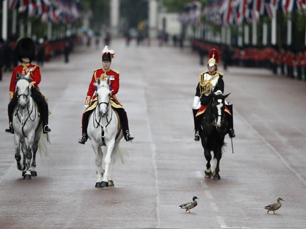 Guarda Real, um oficial e um membro da cavalaria Real (da esquerda para a direita) aguardar a passagem de dois patos próximo ao palácio de Buckingham em Londres, na Inglaterra (Foto: Adrian Dennis/AFP)