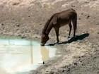 É grave a situação por causa da seca no sul do Ceará