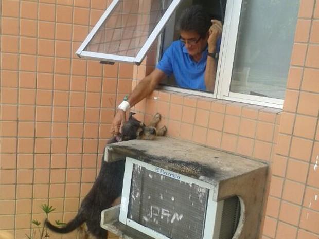 """Revista Eletônica """"O Grito do Bicho"""" - Fazendo a notícia na luta pelo direito dos animais do céu, da terra e do mar."""
