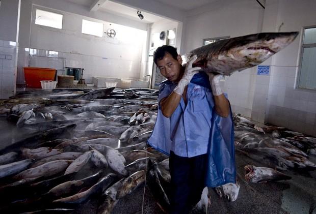 Funcionário carrega tubarão abatido em fábrica de processamento de tubarões (Foto: CHINA OUT/AFP Photo)