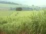 Pesquisa da USP diz que plantação de cana causa danos à biodiversidade