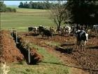 Produtores de leite do RS apostam em irrigação do pasto para o verão