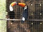 Animais silvestres recebem tratamento homeopático em MS
