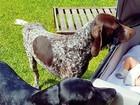 Rafa Brites mostra cães 'tomando conta' do filho recém-nascido