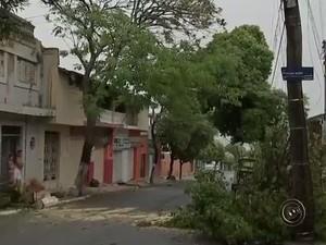 Na Vila Lemos galhos ficaram espalhados pela rua Princesa Isabel (Foto: Reprodução/TV TEM)