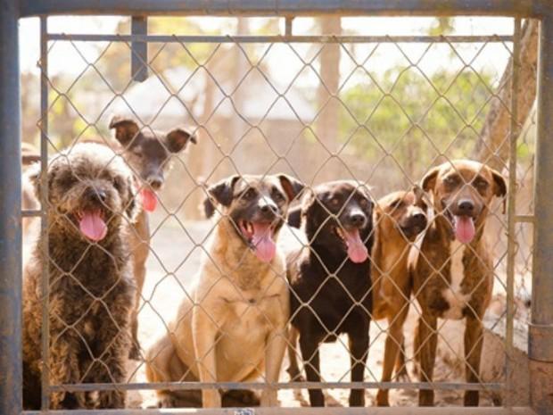 ASPA de Itu atende cerca de 400 cães (Foto: Marina Dotta)