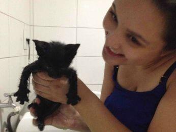 Estudante deu banho e comida para gatinho (Foto: Daniela Boaventura Daubian/ Arquivo pessoal)