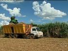 Em SP, usinas antecipam a colheita da cana-de-açúcar