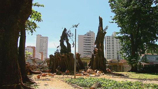 Daae intensifica vistorias em praças após queda de árvore em Araraquara