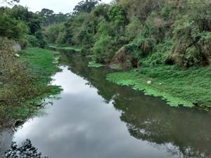 Rio Tietê, em Mogi das Cruzes (Foto: Maiara Barbosa/ G1)