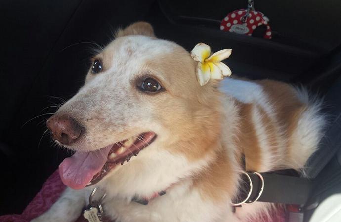 Daisy 2 (Foto: Acervo Pessoal)