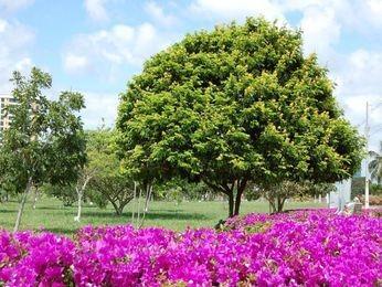 Parque da Sementeira é arborizado e excelente para pratica esportiva (Foto: Emsurb)
