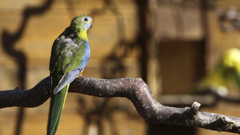 turquoisine_pássaro (Foto: Thinkstock)