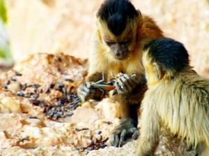 Macacos (Foto: Globo Repórter)