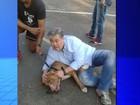Professor salva cão de ataque de pit bull (Reprodução / TV TEM)