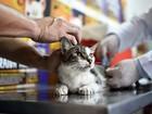 Segunda etapa de vacinação contra a raiva em animais é neste sábado