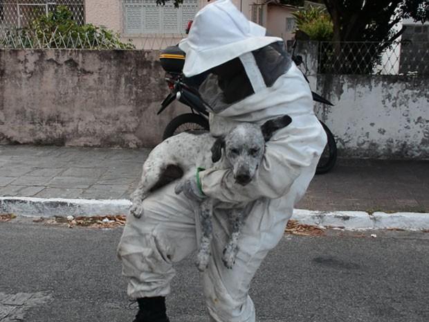 Cachorros também foram socorridos pelos bombeiros (Foto: Walter Paparazzo/G1)