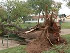 Chuva e vendaval causam estragos em Bauru e região