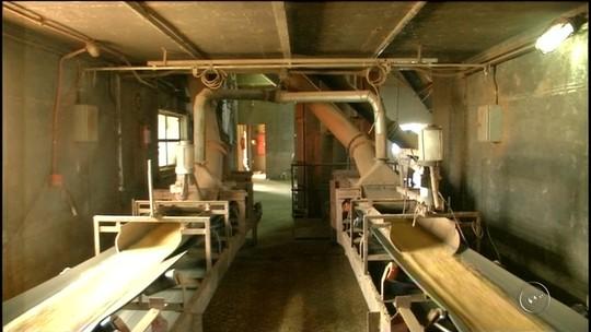Safra de grãos aumenta em Cerqueira César e surpreende produtores