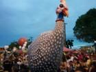 Capote da madrugada arrasta milhares em festa com marchinhas