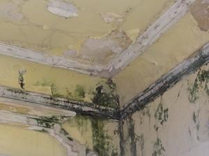 Mofo é aparente em vários pontos do teto do Teatro. (Foto: Penélope Araújo/G1)