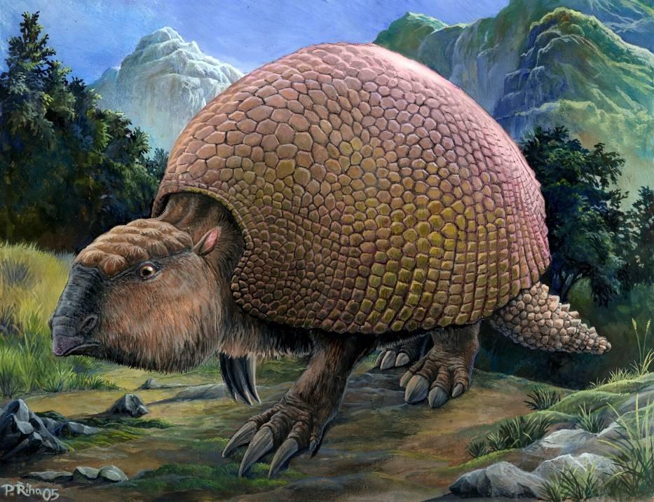 Exemplar de gliptodonte, ancestral dos atuais tatus, que viveu nas Américas há mais de 10 mil anos (Foto: GDFL/Wikimedia Commons)