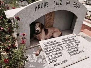 Cadela Branquinha deitada no jazigo do dono, em cemitério no Distrito Federal (Foto: Monique Ferreira Buarque/Arquivo pessoal)