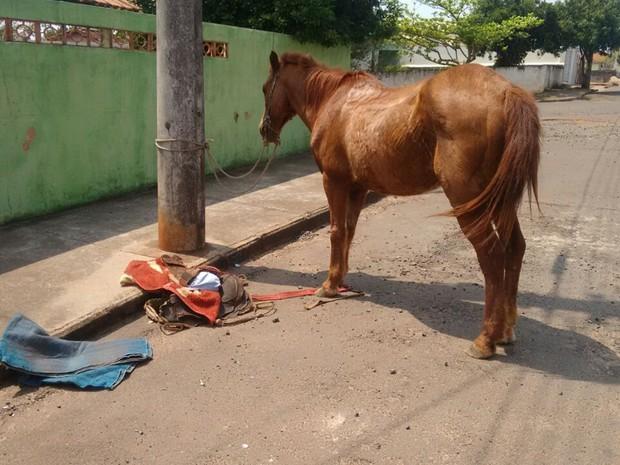 Policiais conseguiram deter rapaz que fugiu a cavalo em Itaporanga (Foto: Divulgação/Polícia Militar)