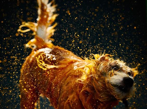 Cão sacode a tinta jogada sobre seu corpo (Foto: Gabriel Morais, Alex Takaki, Lucas Tintori via BBC)