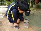 Crianças aprendem na sala de aula a fazer armadilhas para Aedes aegypti