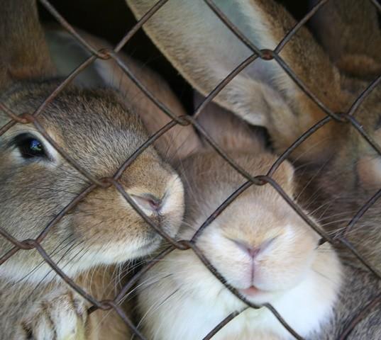Israel, Índia e mais 28 países da União Europeia já baniram os testes em animais para cosméticos  (Foto: Divulgação )