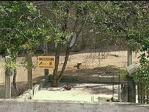 Reclamação de canil em Divinópolis, MG, vai parar na Justiça (Foto: Reprodução/TV Integração)