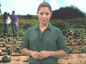 Chrystiane Gonçalves apresenta as notícias do campo no Gazeta Rural (Foto: Reprodução/ TV Gazeta)