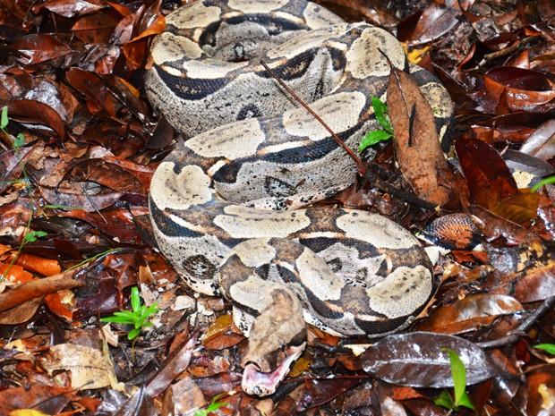 Mais uma vez cobra é capturada em pousada no Litoral Sul da Paraíba (Foto: Walter Paparazzo/ G1 PB)