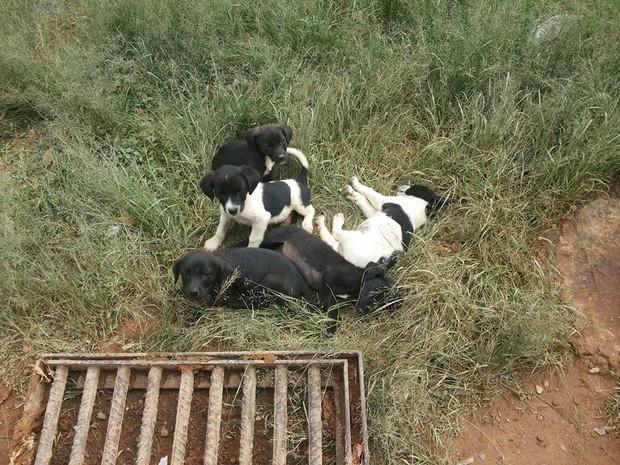 Mais de 30 cachorros vivem abandonados no aterro sanitário (Foto: Sheila Patresi/ Arquivo Pessoal)
