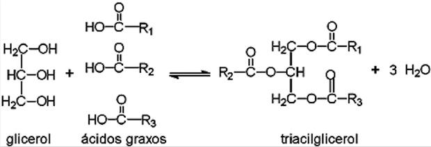 Reação de formação de um triacilglicerol (Foto: Wikipedia)