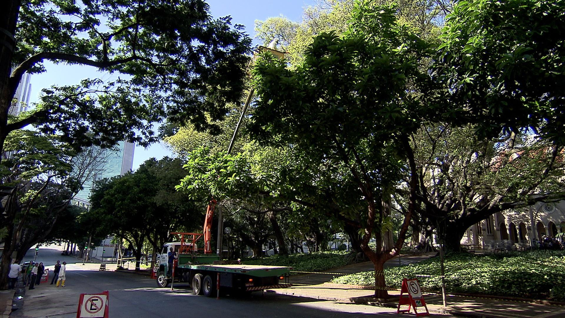 Fícus da praça da Catedral da Boa Viagem recebem remédio contra praga (Foto: Reprodução/TV Globo)
