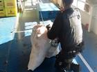 Polícia Federal no AM apreende mais de 200kg de cocaína em embarcação