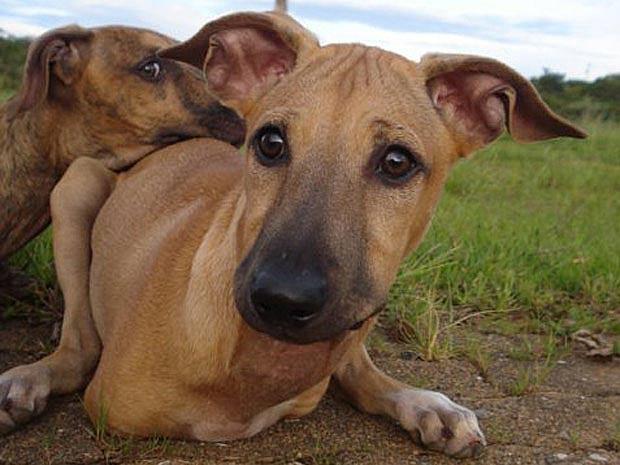 João e Maria, cães que nasceram sem as patas dianteiras e que escaparam de eutanásia (Foto: Facebook/Reprodução)