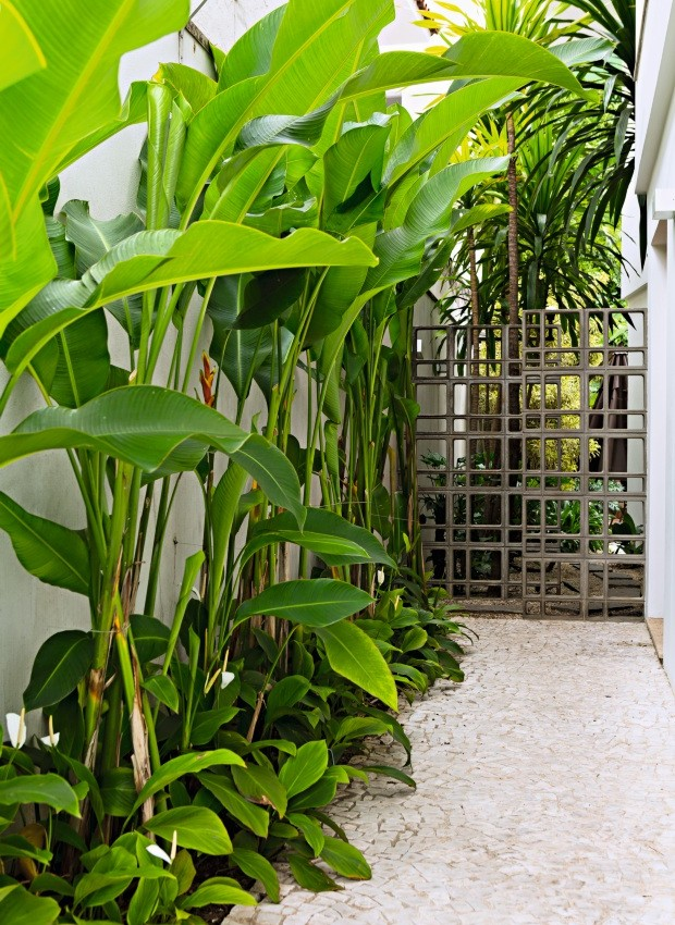 Muro lateral alto, branco e sem graça ganhou ares de floresta tropical (Foto: Edu Castello / Editora Globo)