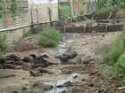 Rio Bananal seca e cidade fica sem  abastecimento no Norte do ES