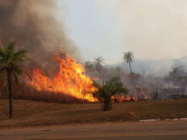 Fogo às margens da rodovia TO-010, em Taquaruçu (Foto: Francisco Rodrigues/Arquivo Pessoal)