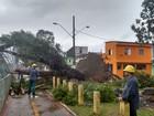 Ventania provoca queda de árvores e destelhamentos na Baixada Santista