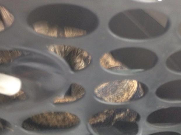 A cobra foi levada para a sede da Suipa, onde passará por exames (Foto: Luís Eduardo Castro/ Suipa)