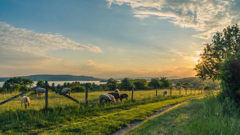 cerca - sítio - fazenda (Foto: Pexels )