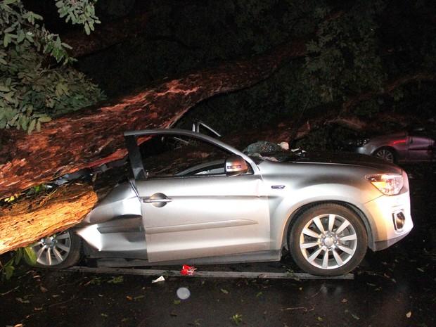 Árvores causaram prejuízos por todo o Grande Recife (Foto: Aldo Carneiro/Pernambuco Press)