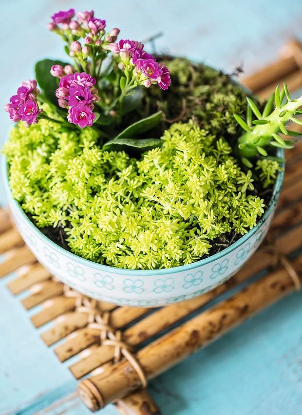 Combine espécies diferentes num bowl e monte um jardim em miniatura para alegrar a mesa de centro ou outro cantinho da casa. Bowl e banco Villa Pano (Foto: Elisa Correa / Editora Globo)