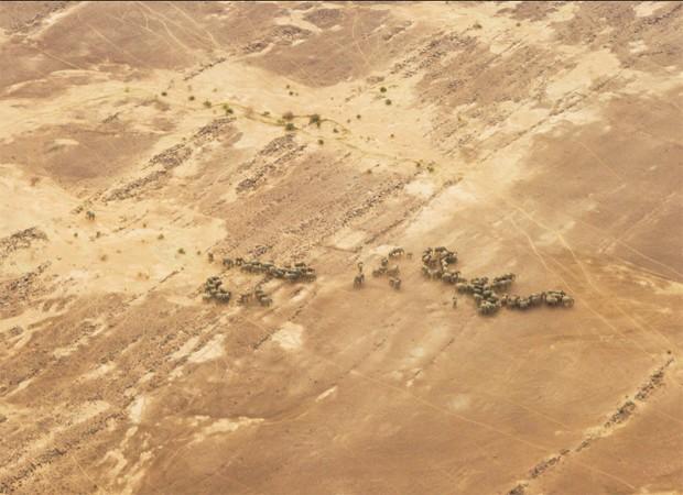 Elefantes africanos percorrem região desértica do Mali em temperaturas que chegam a 50 ºC (Foto: Divulgação/Chyulu Smith/Universidade de Oxford)