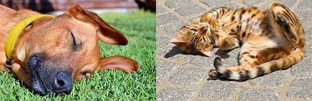 Cachorro e gato no sol (Foto: sxc)